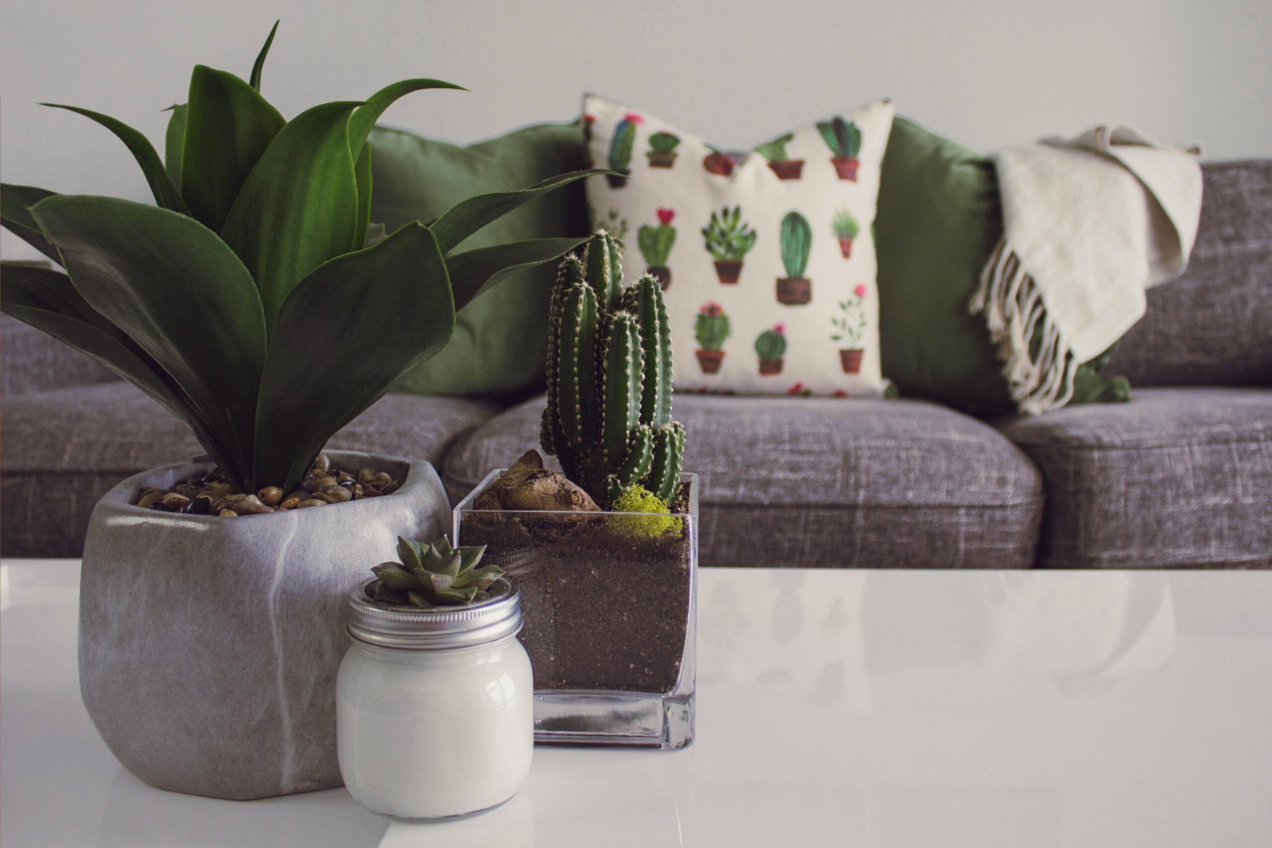 meubels bert plantagie